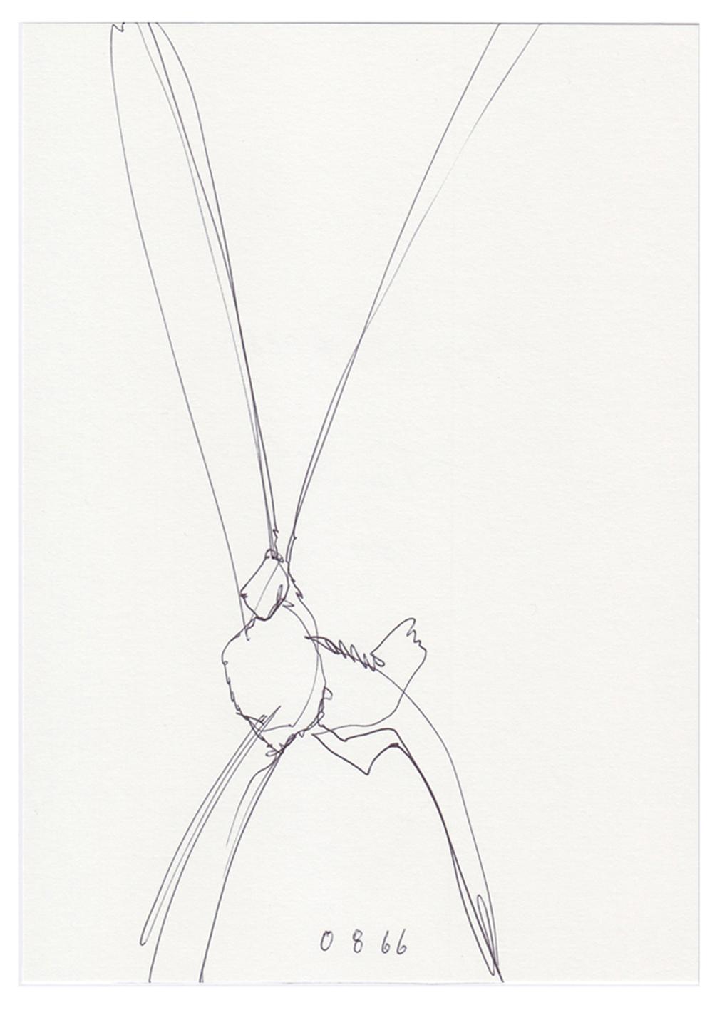 Auf dem Bild ist der gezeichnete Tageshase mit der Nummer: #0866 von der Künstlerin Tina Oelker zu sehen. Es handelt sich um eine Skizze von Meister Lampe.