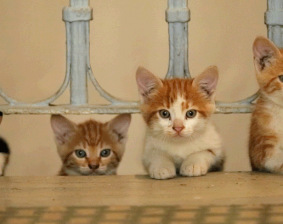 Hier sieht man ein Szenenbild aus dem Film Kedi – Von Katzen und Menschen