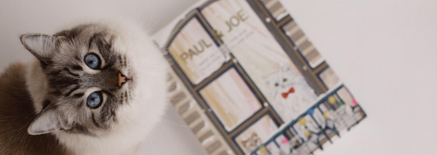 Auf dem Bild ist eine Katze zu sehen, die in die Kamera schaut. Neben ihr liegt ein Adventskalendar von Paul & Joe Beauté