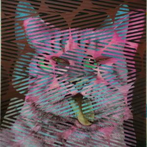 Auf dem Foto ist eine Katze in Form einer Collage zu sehen. Das Bild stammt von Alex Kiessling