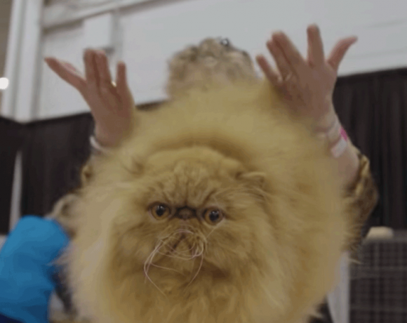 Hier sieht man einen Screenshot aus der Netflix Doku Catwalk.